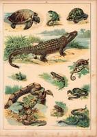 Gyík, kígyó, teknős, krokodil, béka, litográfia 1880, eredeti, 24 x 34 cm, nagy méret, állat