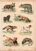 Kutya, farkas, róka, kopó, hiéna, litográfia 1880, eredeti, 24 x 34 cm, nagy méret, állat