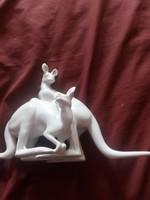 Fehér herendi  kengurú