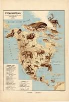 Észak - Amerika állatföldrajzi térkép 1928, magyar nyelvű, 28 x 40 cm, állat, hal, madár, emlős