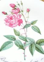 Hutschenreuther porcelán rózsás falitányér
