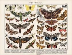 Pillangók, lepkék, litográfia 1920, eredeti, 32 x 41 cm, nagy méret, német, latin, pillangó, lepke