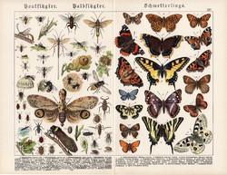 Pillangók, hártyásszárnyúak, félfedelesszárnyúak, litográfia 1920, eredeti, 32 x 41 cm, nagy méret
