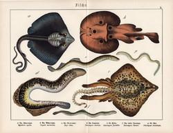 Rája, sasrája, ingola, litográfia 1920, eredeti, 32 x 41 cm, nagy méret, hal, tenger, óceán, víz