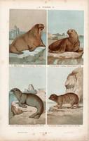 Rozmár, fóka és elefánt, víziló, litográfia 1885, eredeti, 26 x 42 cm, nagy méret, állat