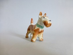 Ritka festésű Aquincum terrier,kutya