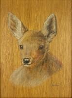 0Y080 Helmut Molinus : Vadászkép - Őz portré