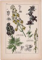 Sisakvirág, szarkaláb és harangláb, katicavirág, békabogyó, litográfia 1895, 17 x 25 cm, virág