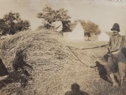 Régi fotó vintage férfi fénykép földművelés aratás