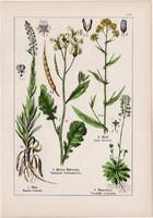 Vadretek, festőcsülleng, rezeda és gomborka, daravirág, holdviola litográfia 1895, 17 x 25 cm, virág