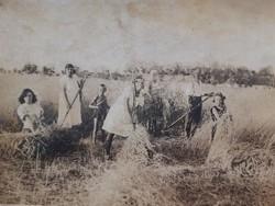 Régi fotó vintage csoportkép fénykép földművelés aratás képeslap