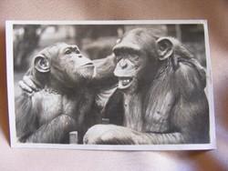 Régi képeslap Zoo Budapest Barátkozás