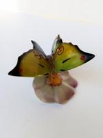 Kőbányai Drasche ritka festésű pillangó orchideán