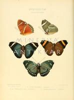 Lepkék, pillangók 12. Vintage/antik zoológiai illusztráció. Kitűnő minőségű reprint nyomat