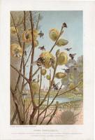 Kora tavasszal, litográfia 1907, színes nyomat, eredeti, magyar, Brehm, állat, méh, beporzás, rovar