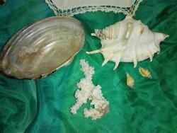 Tengeri csigaház,korall és Tiszai kagylóház.