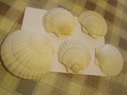5db shell kagyló együtt, akár kínálónak