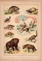 Állatok (4), litográfia 1902, eredeti, kis méret, magyar, állat, hiéna, medve, mosómedve, görény