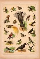 Állatok (17), litográfia 1902, eredeti, kis méret, magyar, állat, madár, kanári, fecske, rigó, pinty