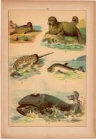 Állatok (15), litográfia 1902, eredeti, kis méret, magyar, állat, bálna, delfin, borjúfóka, narval