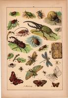 Állatok (22), litográfia 1902, eredeti, kis méret, magyar, állat, bogár, szú, lepke, szitakötő, méh
