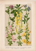 Magyar növények 46, litográfia 1903, színes nyomat, virág, somkóró, iglicz, lóhere, lucerna (3)