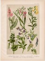 Magyar növények 48, litográfia 1903, színes nyomat, virág, baltacím, lednek, bükköny, borsó (3)