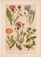 Magyar növények 55, litográfia 1903, színes nyomat, virág farkasfog, buzavirág, kerti körömvirág (3)
