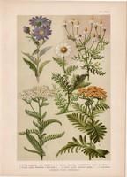 Magyar növények 54, litográfia 1903, színes nyomat, virág székfű, aranyvirág, cickafark, pipitér (3)