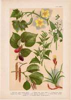 Magyar növények 59, litográfia 1903, színes nyomat, virág, eper, éger, laboda, nyílfű, uborka (3)