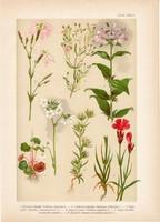Magyar növények 27, litográfia 1903, színes nyomat, virág, szegfű, szikárka, szappanfű, kőrontó (3)