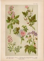 Magyar növények 44, litográfia 1903, színes nyomat, virág, mályva, gerely, keltike, füstike (3)