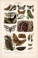 Erdei rovarok I., színes nyomat 1906, német nyelvű, litográfia, eredeti, hernyó, erdő, levél, régi