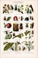 Kerti kártevők II., színes nyomat 1905, német nyelvű, eredeti, litográfia, bogár, rovar, kártevő