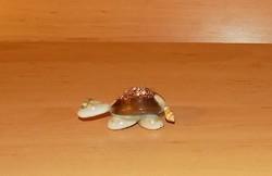 Tengeri csigából készült teknősbéka (1/p)