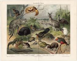 Ausztrál állatvilág, színes nyomat 1905, német, litográfia, állat, Ausztrália, strucc, kenguru, régi