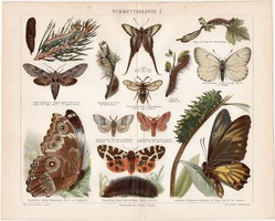 Lepkék I., 1897, színes nyomat, német nyelvű, eredeti, régi, lepke, pillangó, hernyó, litográfia