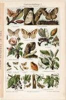 Kerti kártevők I., színes nyomat 1905, német nyelvű, eredeti, litográfia, lepke, hernyó, rovar