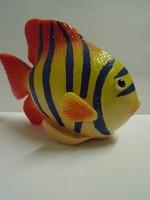 Gyönyörű  igen súlyos tengeri vitorlás hal nagyon szép színek pompázik közel 500 gramm