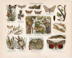 Lepkék II., 1897, színes nyomat, német nyelvű, eredeti, régi, lepke, pillangó, hernyó, litográfia
