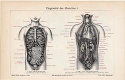 Belek, zsigerek I., II., színes nyomat 1905, német nyelvű, litográfia, gyógyászat, ember, bél, orvos