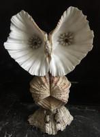 Tengeri kagylóból készült bagoly