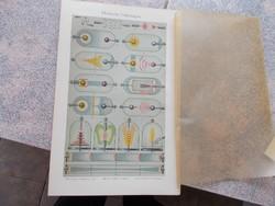 Litografie Meyers,1904, Elektrische Entladungen