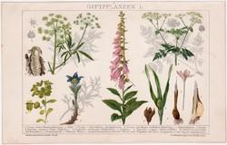 Mérgező növények I., litográfia 1895, színes nyomat, német nyelvű, növény, gyűszűvirág, régi
