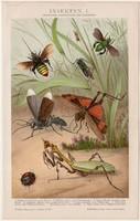 Rovarok I., litográfia 1893, színes nyomat, német nyelvű, Brockhaus, rovar, állat, insekten