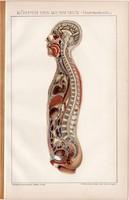 Az emberi test, litográfia 1894, színes nyomat, német nyelvű, Brockhaus, anatómia, gyógyászat, régi