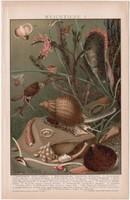 Puhatestűek, litográfia 1895, színes nyomat, német nyelvű, Brockhaus, állat, csiga, puhatestű, régi