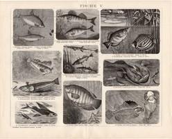 Halak V. és VI., IV., egyszínű nyomat 1893, német nyelvű, eredeti, hal, tenger, óceán, folyó, régi