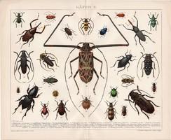 Bogarak II., litográfia 1892, német nyelvű, színes nyomat, Brockhaus, bogár, állat, régi, latin