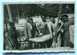 Abbáziai delfinvadászok, 1932. Amatőr fotó, kiváló minőségben